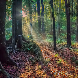 Chill into the Forest by Gilbert Sanchez - Landscapes Forests ( forests, sunny, forest floor, forest, sunrise, sunlight )