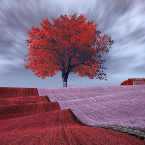Zenit by Caras Ionut - Digital Art Places ( ir, fence, red, tree, purple, wave, pink )