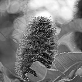 by Reinilda Sissons - Black & White Flowers & Plants