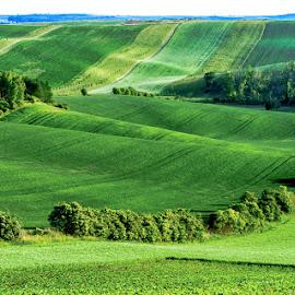 Waves by Vladimir Vocelka - Landscapes Prairies, Meadows & Fields ( waves, czech republic, spring, southern moravia, fields )