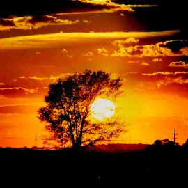 Country Sunset by Nancy Tonkin - Landscapes Sunsets & Sunrises ( clouds, orange, tree, sunset, summer,  )