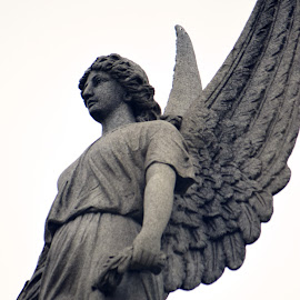 Winged Victory by Dennis Pannell - Buildings & Architecture Statues & Monuments