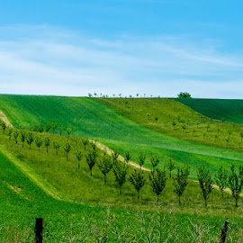 Green belts by Vladimir Vocelka - Landscapes Prairies, Meadows & Fields ( green belts, czech republic, landscapes, spring, fields )