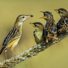 Time To Eat Kids by Leovin Agustim - Animals Birds