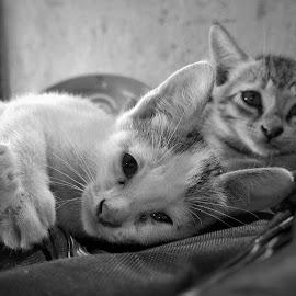 inoccence by Bitupan Das - Animals - Cats Kittens