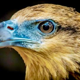 Im Looking for Fish by Ken Nicol - Animals Birds (  )