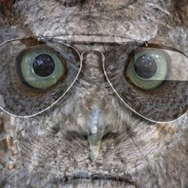 Owl Man by Sandy Scott - Digital Art People ( sunglasses, macro, montage, humor, horror, owl, owl man, man, portrait, manipulation, eyes, digital art )