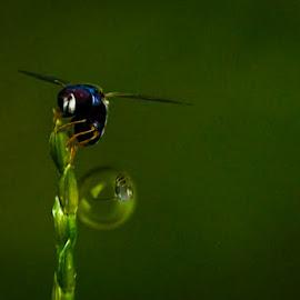 bubble by Sjamsul Rizal - Digital Art Things