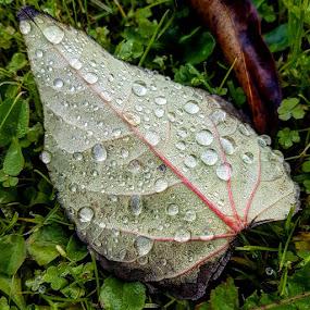 by Zhenya Philip - Nature Up Close Natural Waterdrops ( macro, droplets, nature,  )