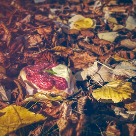 Sandwich with autumn salami by Opreanu Roberto Sorin - Food & Drink Meats & Cheeses ( old, tomato, leaf, appetizer, leaves, rustic, sausage, open, nature, autumn, bread, lifestyle, lunch, black, isolated, dinner, tasty, nutrition, margarine, food, butter, pork, vegetable, natural, plant, salami, breakfast, cheese, object, life, fresh, lettuce, meat, closeup, beautiful, spicy, traditional, still, delicious, snack, salamy, organic, wooden, red, sandwich, color, background, fall, sliced, healthy, brown, slice, design, world )