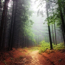 20170916-DSC_1650 by Zsolt Zsigmond - Landscapes Forests ( green color, mystery, scenics, forest, beauty in nature, leaf, morning, sunlight, landscape, light - natural phenomenon, magic, season, nature, tree, fog, autumn, outdoors, woodland, sunbeam, mist )