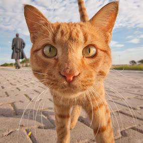 Look at me by Booba Booba - Animals - Cats Portraits