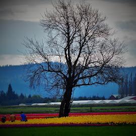 flowers by Lavonne Ripley - Landscapes Prairies, Meadows & Fields