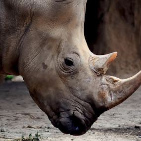 RHINO by Repindo Nasution - Animals Other Mammals ( animals, wildlife )