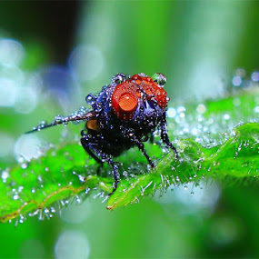 by Adie Photograph - Animals Insects & Spiders ( macro )