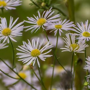 cvijeće-41.jpg