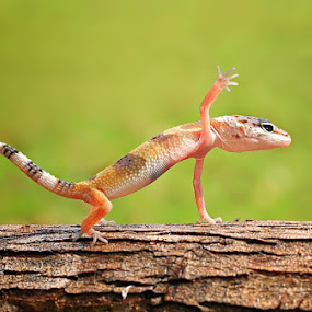 push up by Shikhei Goh II - Animals Reptiles ( shikhei, teman )