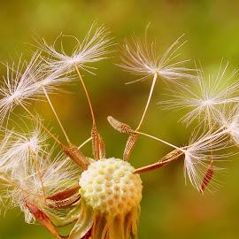 by Eva Doe (Antonija Kodžoman) - Nature Up Close Other plants