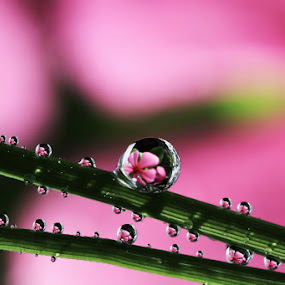 Windmill of Dews by Ahmad Soedarmawan - Nature Up Close Water