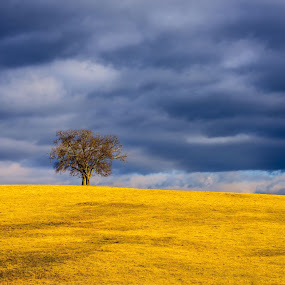 Lonely by Robert Golub - Landscapes Prairies, Meadows & Fields