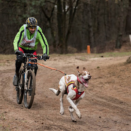 Fast dog  by Wendy Chlum - Sports & Fitness Cycling ( bike, dog, running, bicycle )
