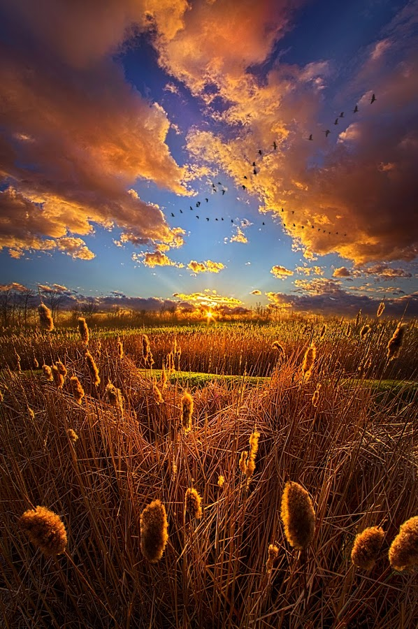 So Long I can't Remember by Phil Koch - Landscapes Prairies, Meadows & Fields ( vertical, travel, yellow, love, sky, nature, weather, light, orange, colors, twilight, art, mood, journey, horizon, portrait, country, dawn, environment, season, serene, outdoors, lines, natural, hope, inspirational, wisconsin, ray, joy, landscape, sun, photography, life, emotions, dramatic, horizons, inspired, clouds, office, park, heaven, beautiful, scenic, living, morning, field, blue, sunset, amber, peace, meadow, beam, sunrise, earth )