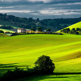 Hills by Emanuele Zallocco - Landscapes Prairies, Meadows & Fields ( field, hills, green, italy, marche )