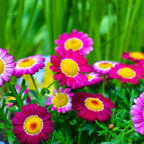 Beautiful by Kelvin Đào - Nature Up Close Gardens & Produce ( pwcflowergarden, red, grass, green, pink, flowers )
