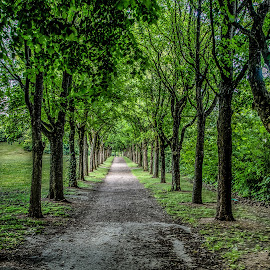 Allée by Jerry Kambeitz - City,  Street & Park  Neighborhoods ( pathway, trees, walkway, long, allée )