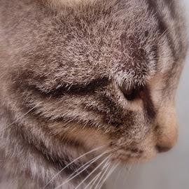 by Ghazala .S. Mujtaba - Animals - Cats Portraits