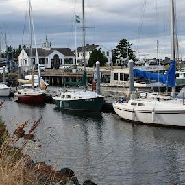 Sail Boats in port by Terry Oviatt - Transportation Boats