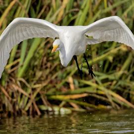 Bird 073 by Raphael RaCcoon - Animals Birds
