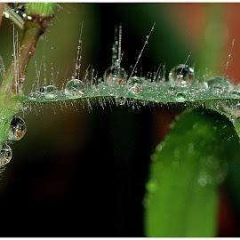 Rain drops on the grass by Renata Ivanovic - Nature Up Close Water ( water, nature, grass, drops, close up, rain )