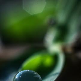 Th dew.... by Kawan Santoso - Nature Up Close Natural Waterdrops