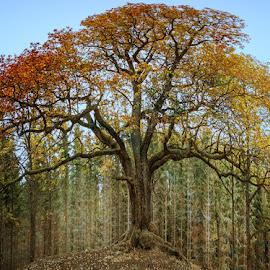 by Jari Johnsson - Landscapes Forests