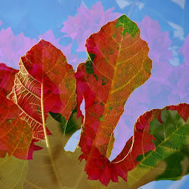 Playing with double exposure by Simona Serdiuc - Digital Art Abstract ( abstract, bougainvillea, double exposure, abstract art, leaf, leaves, golden hour )