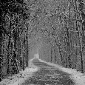 Long Walk by Ann Overhulse - Black & White Landscapes