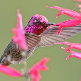 HummerFun ~ 99499 by Raphael RaCcoon - Animals Birds