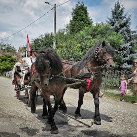 Čigoć,Croatia by Dunja Kolar - Animals Horses ( čigoć )