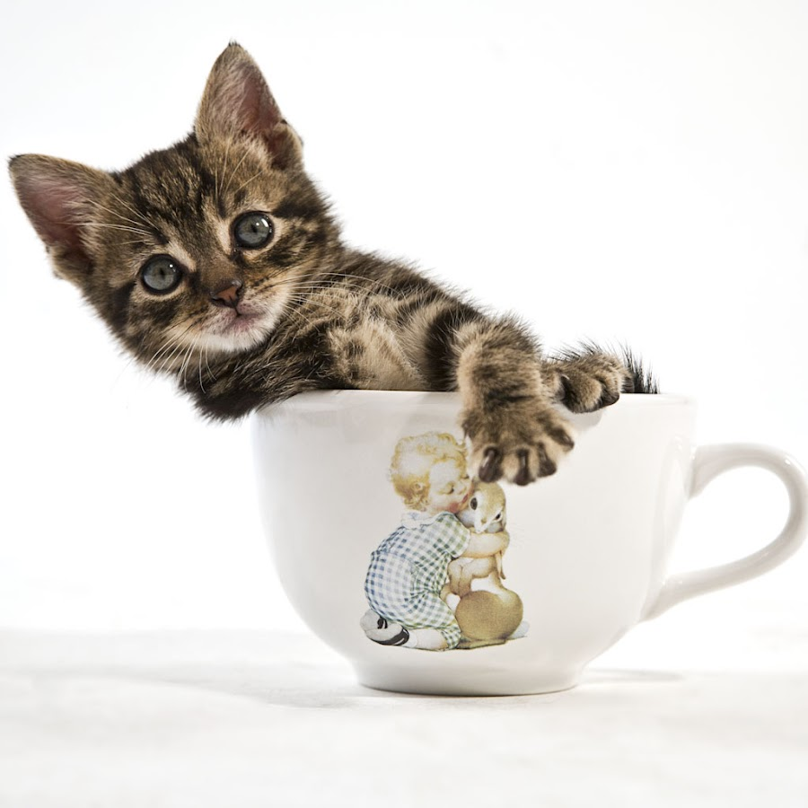 a cup of kitten by Paolo Tangari - Animals - Cats Portraits ( cup, cat, kitten, pet, still-life, gatto, baby, young, animal )