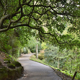 Tree Archway  by Eloise Rawling - Nature Up Close Trees & Bushes ( arch, autumn, trees )