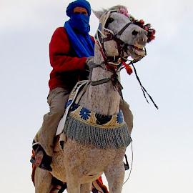 Cavalier du désert by Ramade Genevieve - Animals Horses (  )