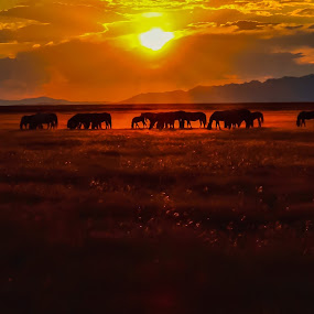 Sunset cafeteria  by Jeannie Matteson - Animals Horses (  )