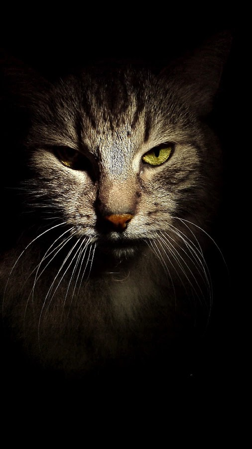 *** by Jurijs Ratanins - Animals - Cats Portraits ( mobilography, cat )