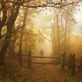 The mysterious man by Matej Kováč - Landscapes Forests ( autumn, fog, forest,  )