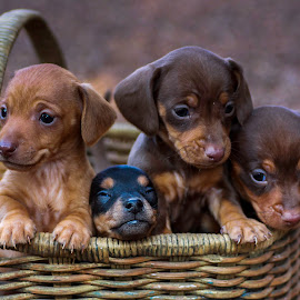 Thight fit. by Susan Pretorius - Animals - Dogs Puppies