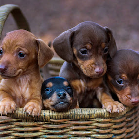 Thight fit. by Susan Pretorius - Animals - Dogs Puppies (  )