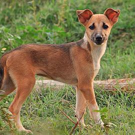 Best Friend by Ikhwan Ameer - Animals - Dogs Puppies ( puppies, contest, best friend, puppy, dog, friend )
