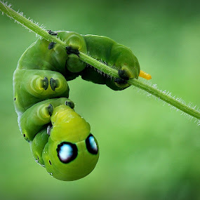 green by Abbiel Tonny - Animals Insects & Spiders