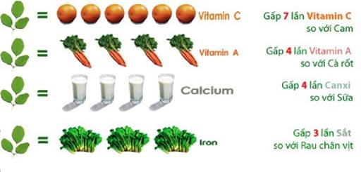 Rau chùm ngây nhiều dinh dưỡng